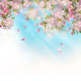 La primavera Apple sboccia illustrazione vettoriale