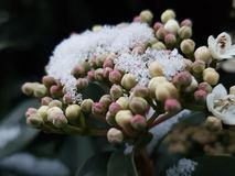 La primavera combatte l'inverno Fotografia Stock Libera da Diritti