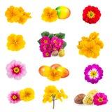 La primavera de Pascua florece la colección del huevo de Pascua Imagen de archivo