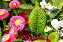 La primavera de la primavera planta el detalle imagen de archivo libre de regalías