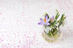 La primavera del azafrán florece el fondo Fotografía de archivo libre de regalías
