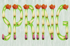 La primavera del cartel de tulipanes ilustración del vector