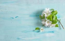 La primavera del flor del manzano florece el fondo azul de la acuarela Foto de archivo libre de regalías