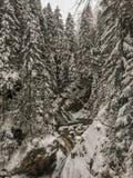 La primavera del invierno alimentó las cascadas en el invierno, Tatry, Polonia de la cala imagenes de archivo