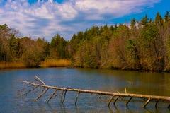 La primavera emerge a partire dall'inverno fotografia stock
