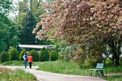 La primavera en el parque Fotografía de archivo libre de regalías