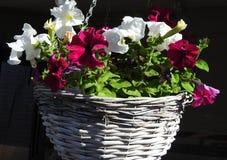 La primavera es aquí sale de su cesta de la ejecución imágenes de archivo libres de regalías
