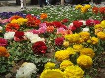 la primavera es llena de hierba y colorida imagen de archivo
