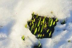 La primavera está casi aquí Imágenes de archivo libres de regalías