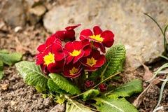 La primavera está viniendo Fotos de archivo libres de regalías