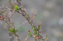 ¡La primavera está viniendo!!! Imagen de archivo
