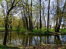 La primavera está viniendo en el parque fotografía de archivo