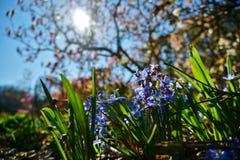 La primavera está viniendo en Nueva Zelanda Fotografía de archivo