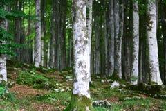 La primavera está viniendo y los bosques dan vuelta verde foto de archivo