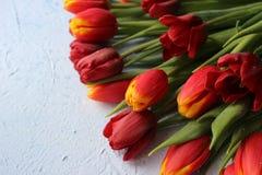 La primavera fiorisce i tulipani su un fondo blu 8 marzo, giorno internazionale del ` s delle donne, giorno del ` s della madre o Fotografia Stock