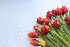 La primavera fiorisce i tulipani su un fondo blu 8 marzo, giorno internazionale del ` s delle donne, giorno del ` s della madre o Fotografia Stock Libera da Diritti