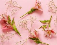 La primavera fiorisce il alstroemeria su un rosa Immagine Stock Libera da Diritti
