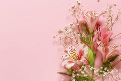 La primavera fiorisce il alstroemeria su un rosa Fotografia Stock