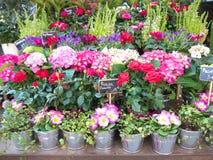La primavera fiorisce il fiorista all'aperto Prices Euro France dell'esposizione Fotografia Stock