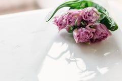 La primavera fiorisce il giorno del ` s delle donne delle donne dei tulipani Fotografia Stock