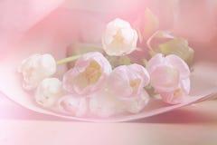 La primavera fiorisce l'insegna - mazzo di fiori rosa del tulipano su fondo dolce Fotografia Stock