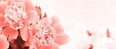 La primavera florece concepto imagen de archivo