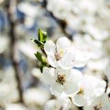 La primavera florece el fondo Fotos de archivo