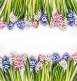 La primavera florece el fondo con los jacintos coloridos en de madera blanco Fotos de archivo