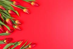 La primavera florece el marco de los tulipanes en fondo rojo Foto de archivo libre de regalías