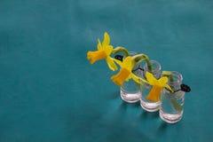 La primavera florece en 3 floreros de lado a lado e inclinándose abajo con el bl fotografía de archivo