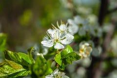 La primavera florece en una cama de flor en el jardín imágenes de archivo libres de regalías