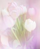 La primavera florece la bandera - manojo de flores rosadas del tulipán en fondo dulce Imagen de archivo