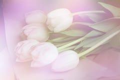 La primavera florece la bandera - manojo de flores rosadas del tulipán en fondo dulce Foto de archivo libre de regalías