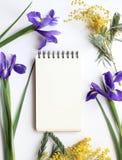 La primavera florece la mimosa y a Iris Mockup Medios del social del blog de los posts Fotos de archivo libres de regalías