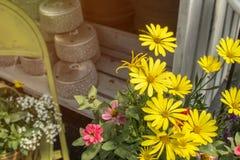 La primavera florece los accesorios cercanos en conserva del jardín y seaso del establecimiento Imágenes de archivo libres de regalías
