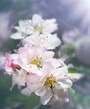 La primavera florece los flores Fotografía de archivo