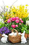 La primavera florece los huevos de los conejitos de la decoración de Pascua Imagen de archivo libre de regalías