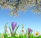 La primavera florece snowdrops, el azafrán y la margarita fotos de archivo