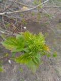 La primavera ha venido imagen de archivo