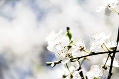 La primavera ha venido en Rassia fotos de archivo