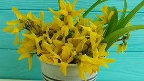 La primavera hermosa amarilla del amarillo de la primavera de las flores florece las flores amarillas de la primavera que gotean
