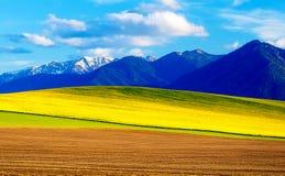 La primavera hermosa aró el campo y el prado verde y amarillo Montaña en fondo Eslovaquia, Europa Central, Liptov Foto de archivo