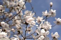 La primavera hermosa en los árboles florecientes imagen de archivo libre de regalías