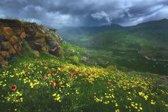 La primavera hermosa florece el frente de montañas brumosas imagen de archivo