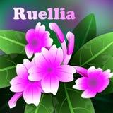 La primavera hermosa florece ruellia púrpura tarjetas o su diseño con el espacio para el texto Vector Imágenes de archivo libres de regalías