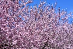 la primavera maravillosa fotografía de archivo libre de regalías