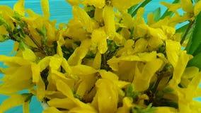 La primavera natural del amarillo de la primavera de las flores hermosas amarillas florece las flores amarillas de la primavera q