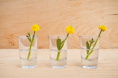La primavera o el verano florece en vidrios en un fondo de madera de la tabla foto de archivo libre de regalías