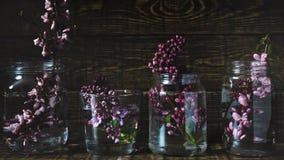 La primavera púrpura pintoresca florece en los floreros de cristal que se colocan en fila en un fondo de madera oscuro Cierre par Fotos de archivo libres de regalías