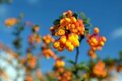 La primavera ritorna! Fiore. Fotografia Stock Libera da Diritti